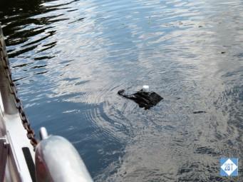 AA Marshmellow Gator 1